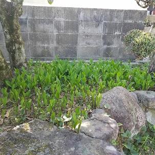 18-4-13_suzuran1.jpg